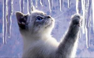 Pas à pas.. Le petit chat et le glaçon.. Chatglace-300x187